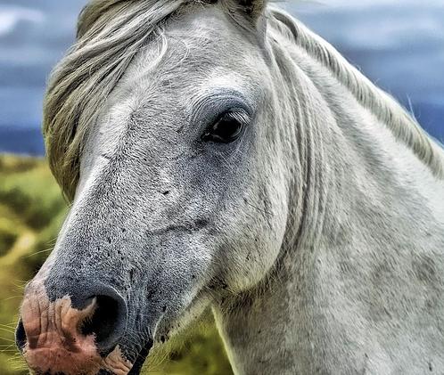pferdewirt-gehalt