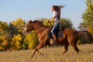 Pferdewirt Gehalt Ausbildung
