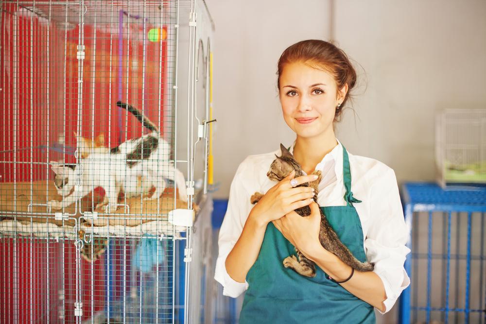Tierarzthelferin Ausbildung